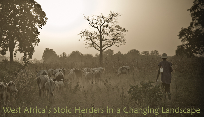 West Africa's Stoic Herders in a Changing Landscape